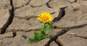 flower-887443_1920
